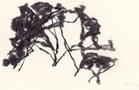 hollan, fusain sur papier 1, 2012, 16 x 24 cm