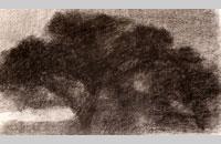 derviche tourneur, fusain, 2015, 50x65 cm