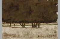 Phénoménal, 2013,59 x79.9 cm