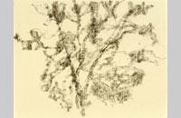Félix Stundika, sans titre, fusain sur papier d \'ingres 24x32cm, 2014