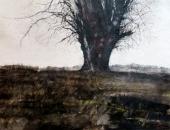 """""""Le vieil arbre"""", encre et fusain, 50x70cm, 2017"""