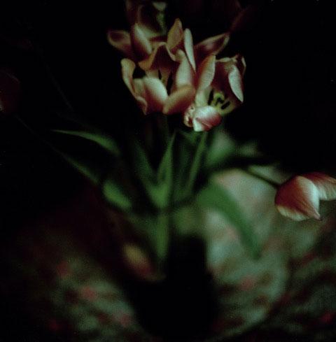 Les tulipes, 2016