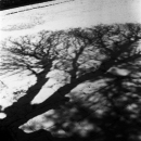 L'arbre Humahuaca, 2019