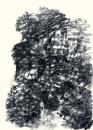 Félix Studinka - Chestnut Journal p.35, fusain sur papier, 29,7 x 21 cm
