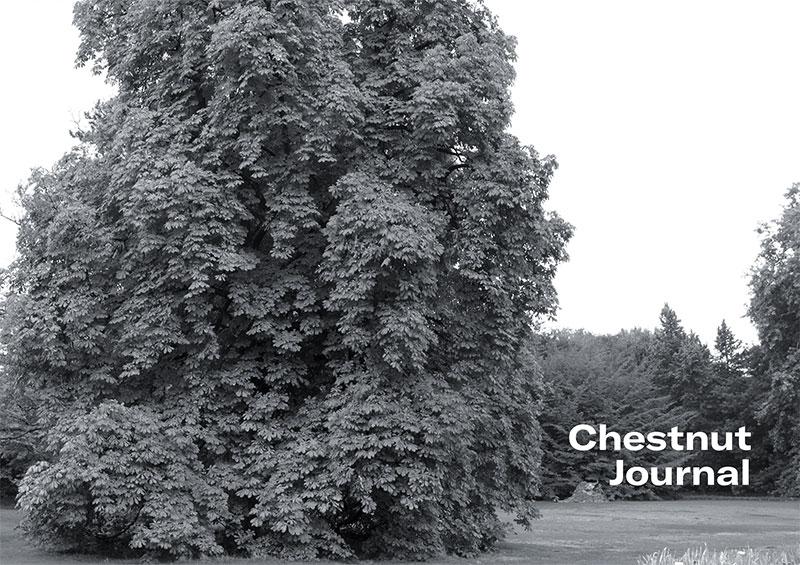 Félix STUDINKA - 'Chestnut journal' -  Journal intime d'un arbre - Exposition du 13 au 29 juin à la galerie LIGNE 13